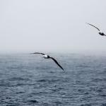antarctica-20131106-0078-sr