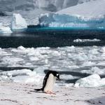 antarctica-20131109-0786-sr