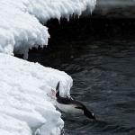 antarctica-20131109-0958-sr
