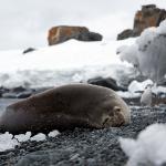antarctica-20131112-1681-sr