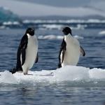 antarctica-20131113-1811-sr
